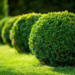 debowetarasy.com.pl - Krzewy ozdobne do ogrodu - jakie wybrać?