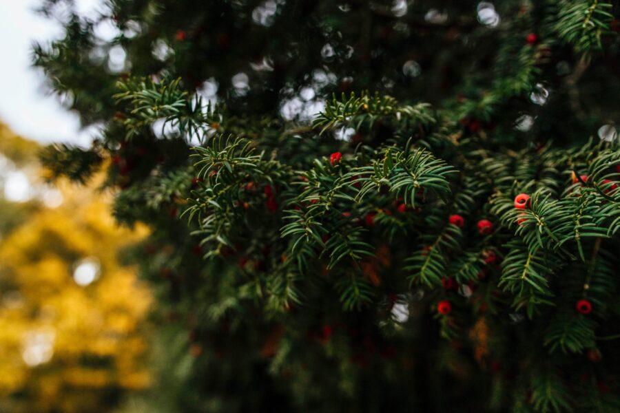Świąteczne dekoracje na taras i do ogrodu